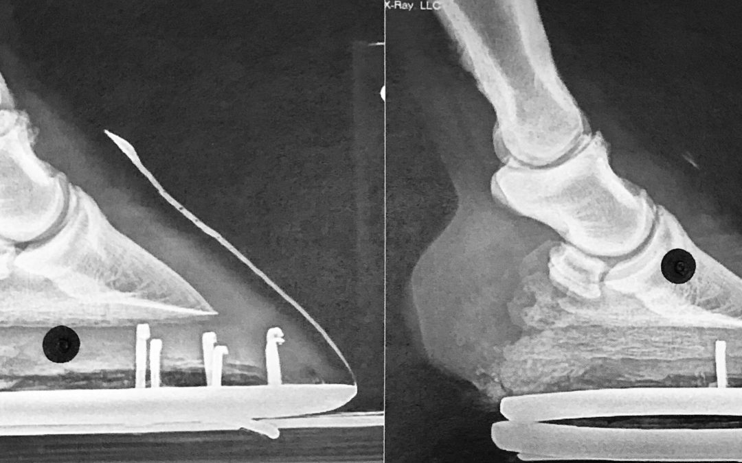 Radiographs for the Farrier